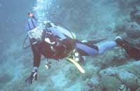 robert reil scuba diving in the philippines